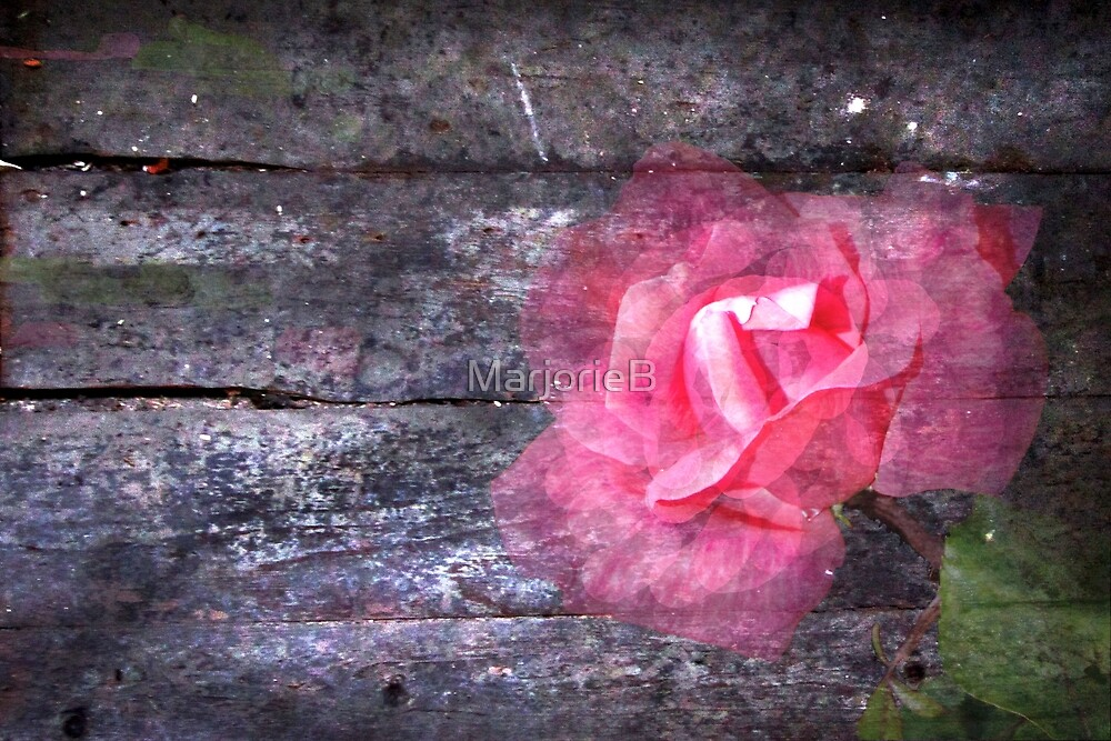 For Ash:  Once You Gave Me a Rose... by MarjorieB