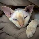 Sleepy Oliver 1 by Glennis  Siverson