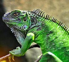 Iguana by Steven  Agius