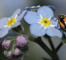 The LadyBeetle and the ForgetMe Knot! by KiriLees