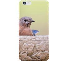Bluebird Greeting iPhone Case/Skin