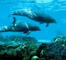Bottle Nose Dolphins by ivanfeltonglenn