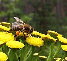 Bee by SophiaDeLuna