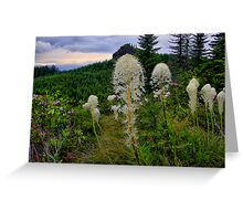 Wild Bear Grass ~ Oregon Cascades ~ Greeting Card