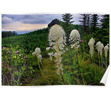 Wild Bear Grass ~ Oregon Cascades ~ Poster