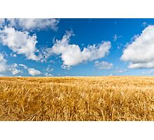 Wheat field with blue sky Photographic Print