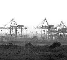 Cranes on Dollymount Strand in Dublin by Dave  Kennedy