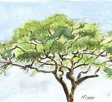 Acacia study by Maree Clarkson