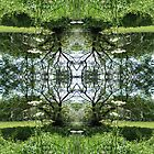 Kaleidoscope - Tree Series Summer by Circe Lucas