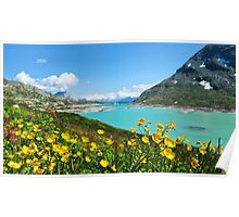 Buttercups at the Bernina Pass - Graubünden - Switzerland Poster
