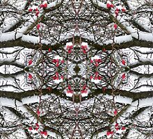 Kaleidoscope - Tree Series Rosehip by Circe Lucas