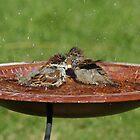 Splish Splash We Were Taking a Bath by Richard Williams