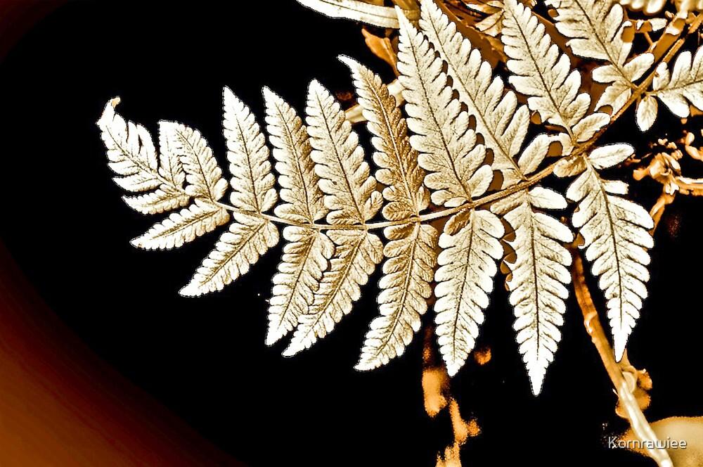 Art on leafs... by Kornrawiee
