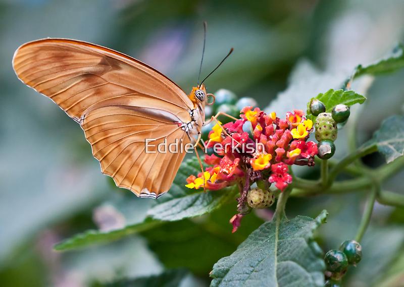 Julia Butterfly by Eddie Yerkish