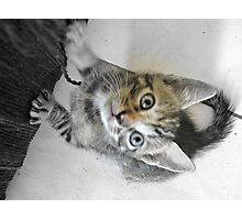 Such a Pretty Kitty Photographic Print