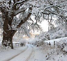 The road in winter/Ffordd yn y Gaeaf by blodauhyfryd