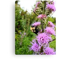 Bumble bee slurping nectar Canvas Print