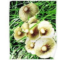 Shroom Flowers Poster