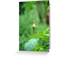 a rosebud,green,beautiful blur………………… Greeting Card