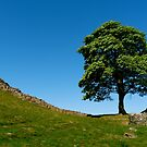 Sycamore Gap - Robin Hood Tree by Danielle Chappell-Hall