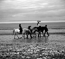 horses on the beach by shaun pearce