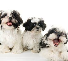 Three Happy Puppies by Ken  Hurst