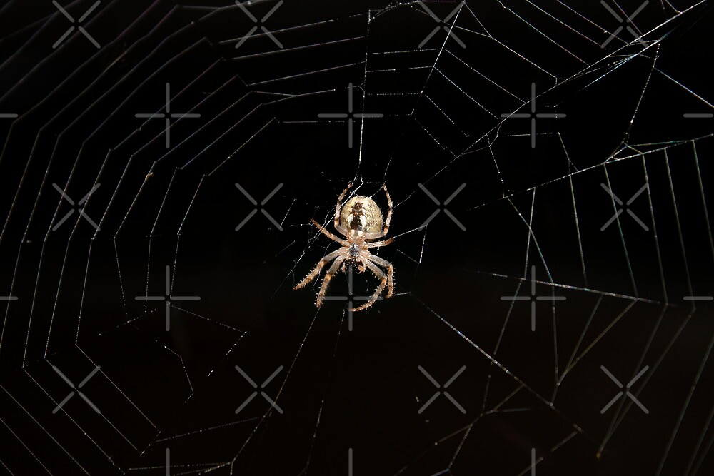 Spider on a web by qiiip