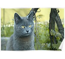 Gray cat outdoors Poster