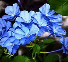So blue by ♥⊱ B. Randi Bailey