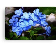 So blue Canvas Print
