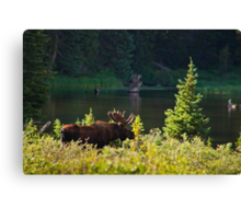 Moose At Brainard Canvas Print