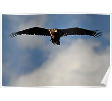 Yellowstone 2011 - Golden Eagle Poster