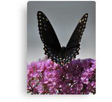 V Wings Canvas Print