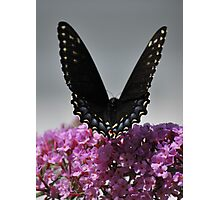 V Wings Photographic Print