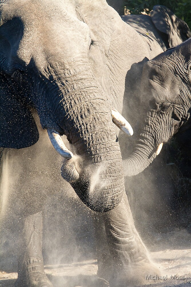 Dust Bath Time by Michael  Moss