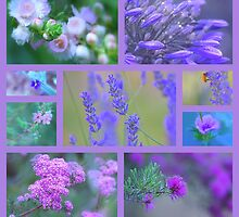 Lilac and Pink by Jill Fisher