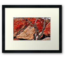 BUSHVELD SURVIVAL AND SANDSTONE ROCK Framed Print