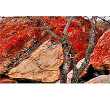 BUSHVELD SURVIVAL AND SANDSTONE ROCK Photographic Print