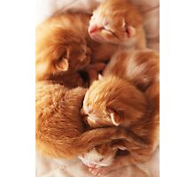 Day old kittys Photographic Print