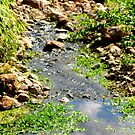 Tranquil Stream by Nicki Baker