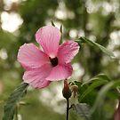 Wild Flower by MaluMoraza