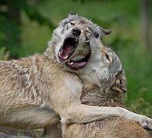 Beast Friends Forever by Daniel  Parent