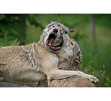 Beast Friends Forever Photographic Print