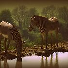 Zebras by erose