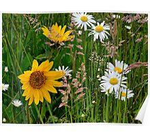Mixed Group ~ Wildflowers ~ Poster