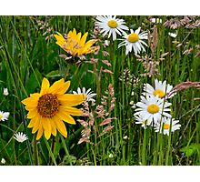 Mixed Group ~ Wildflowers ~ Photographic Print