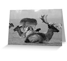 Wild Deer & Blackbird, Phoenix Park, Dublin Greeting Card