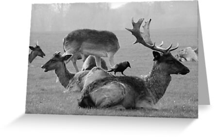 Wild Deer & Blackbird, Phoenix Park, Dublin by Dave  Kennedy