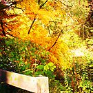 A Golden Explosion of Color by teresa731