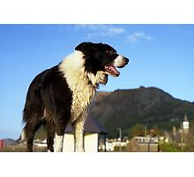 On the wall with Indy Photographic Print